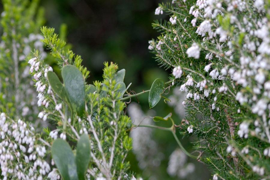 Sentier de découverte botanique du Maquis
