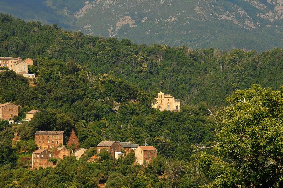 Le sentier des arbres de Castagniccia