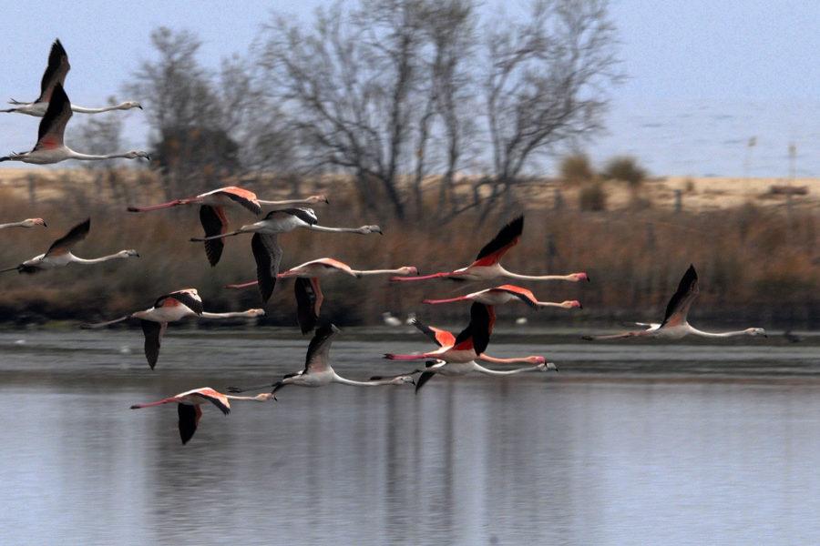 Les oiseaux des zones humides