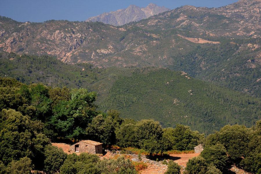 Sentier forestier de la Haute Vallée de la Gravona