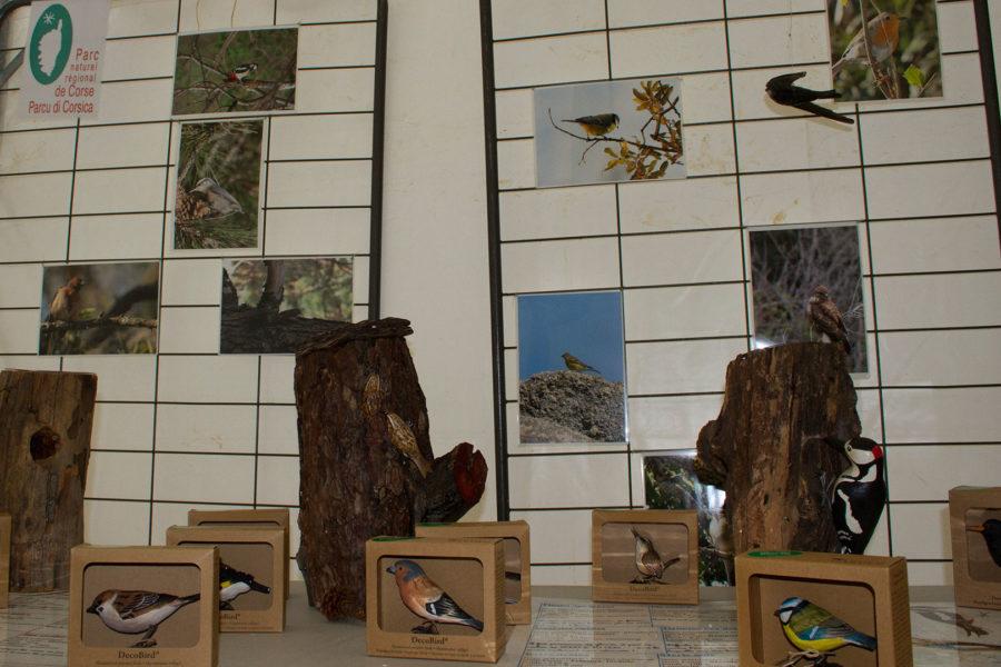 Kit d'observation des oiseaux