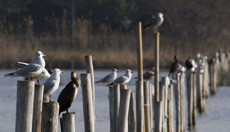 Visite à la réserve naturelle de l'étang de Biguglia
